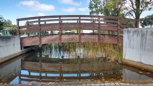 Free stock photo of bridge, trees, water