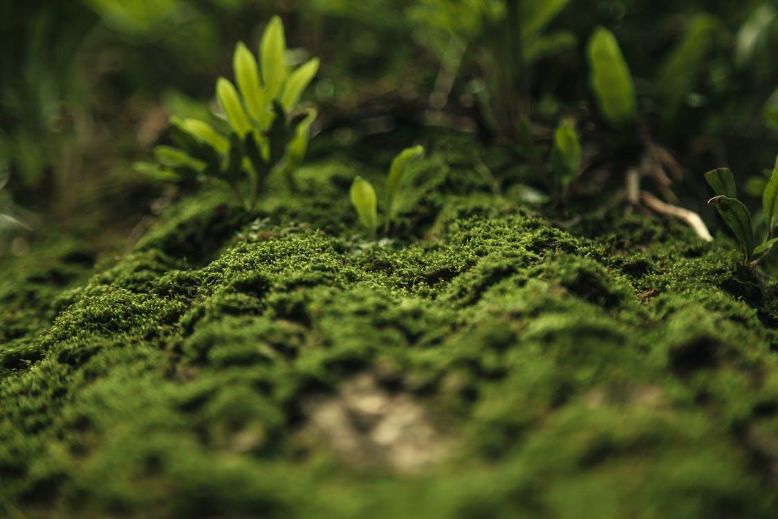 зеленый, зеленый мох, мох
