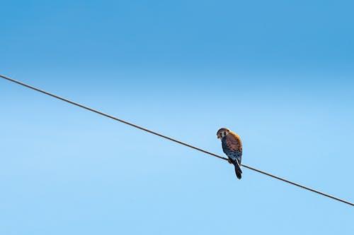 Foto d'estoc gratuïta de animal, au, aviari, posat