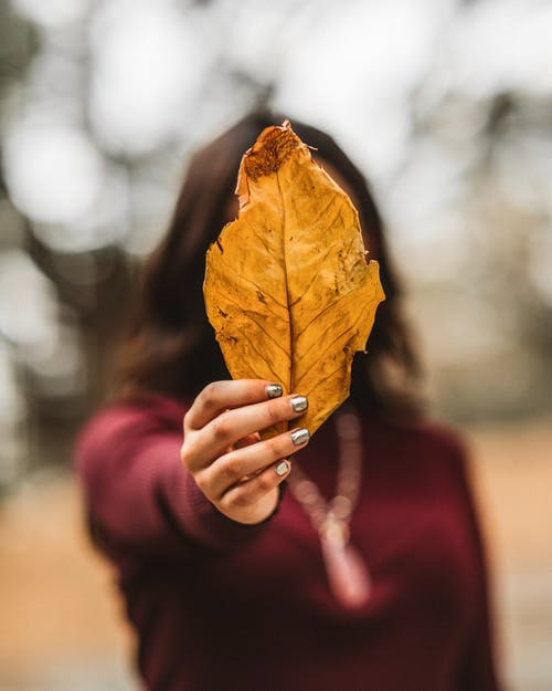 Woman Holding Dry Leaf
