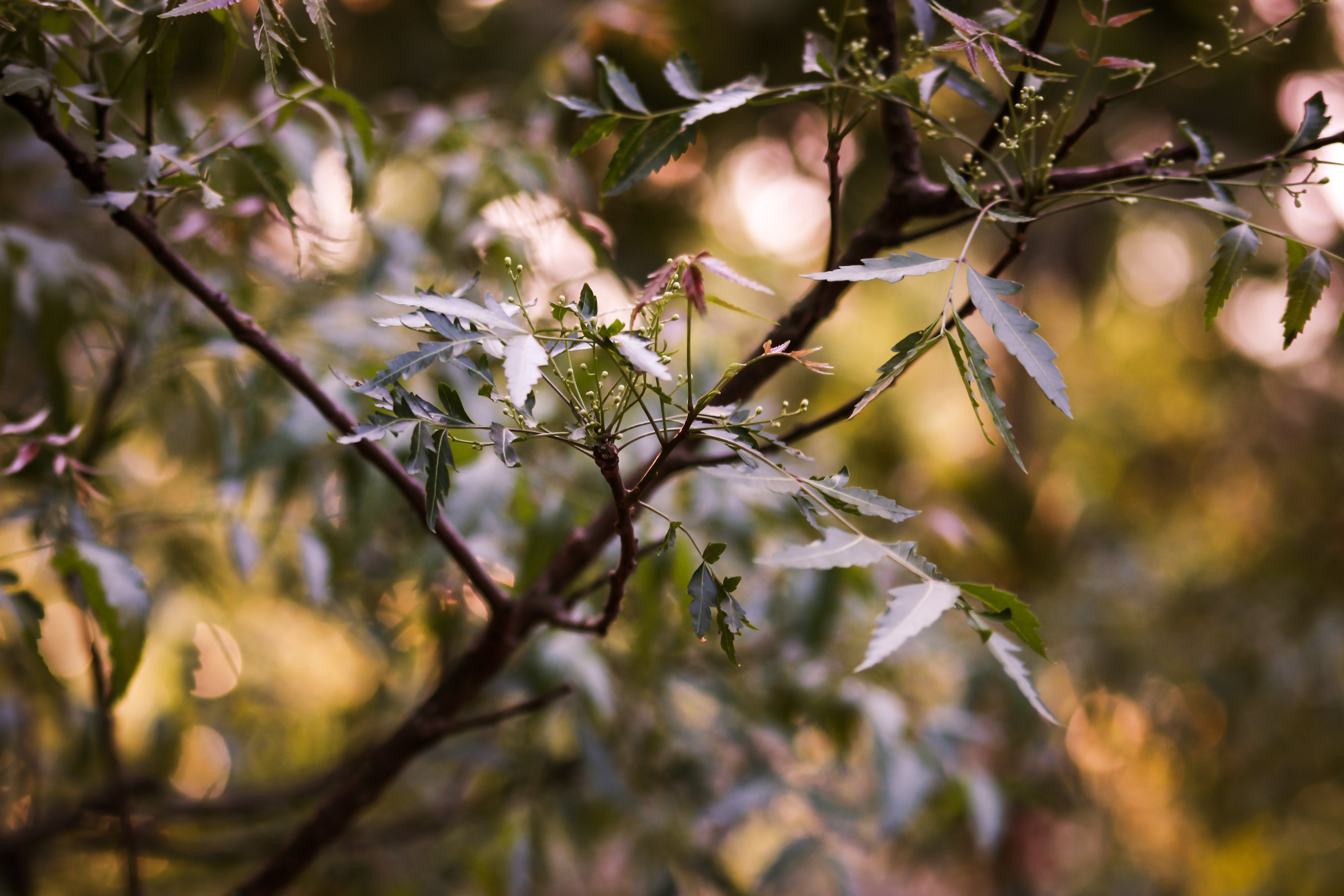 Foto profissional grátis de #desafioaoarlivre, árvore com flores, galho de árvore