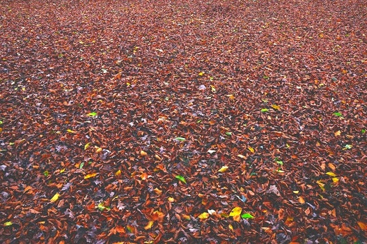 Desktop background of landscape, nature, dry, leaves