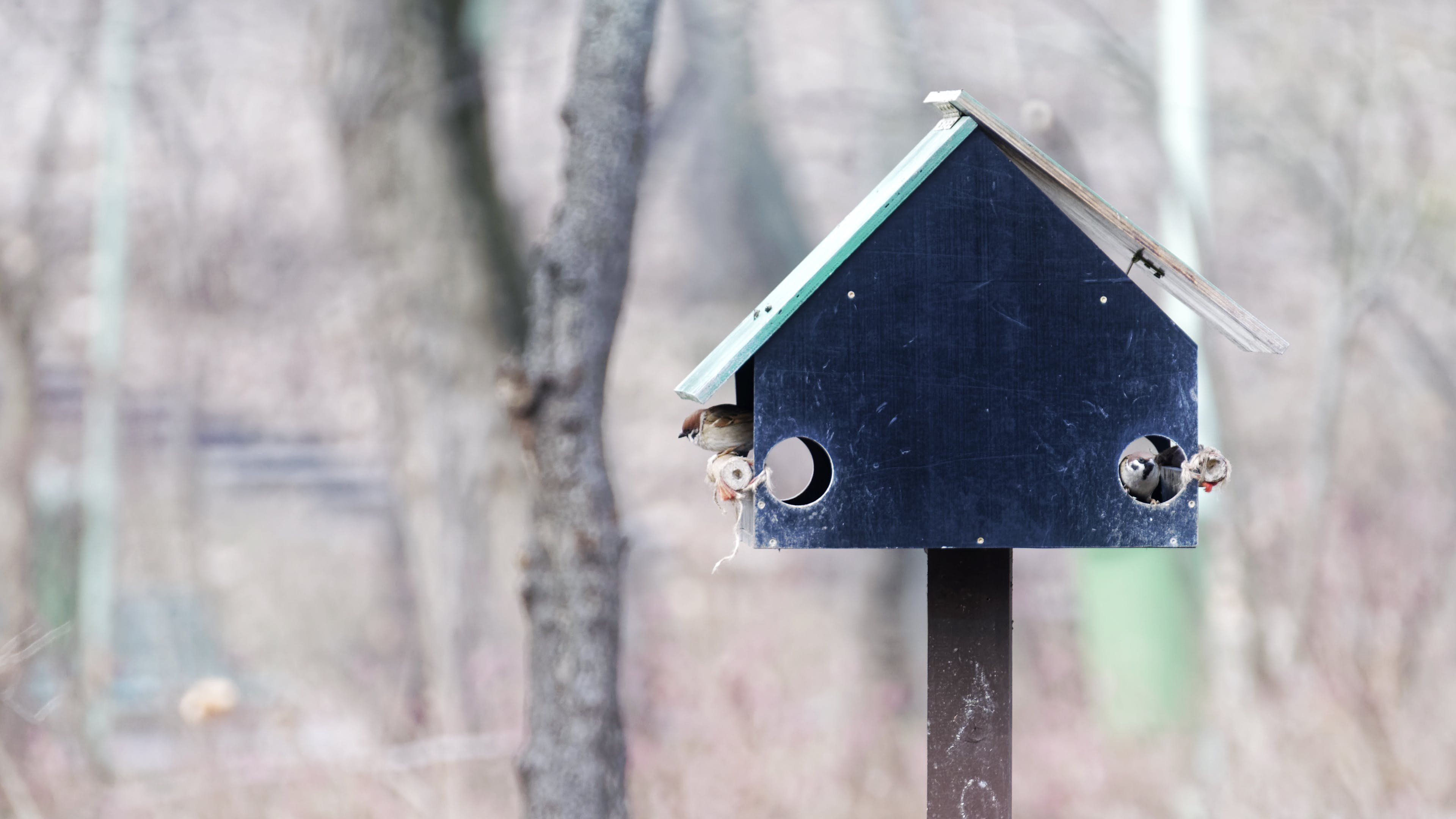 Free stock photo of nature, park, sparrows, trees