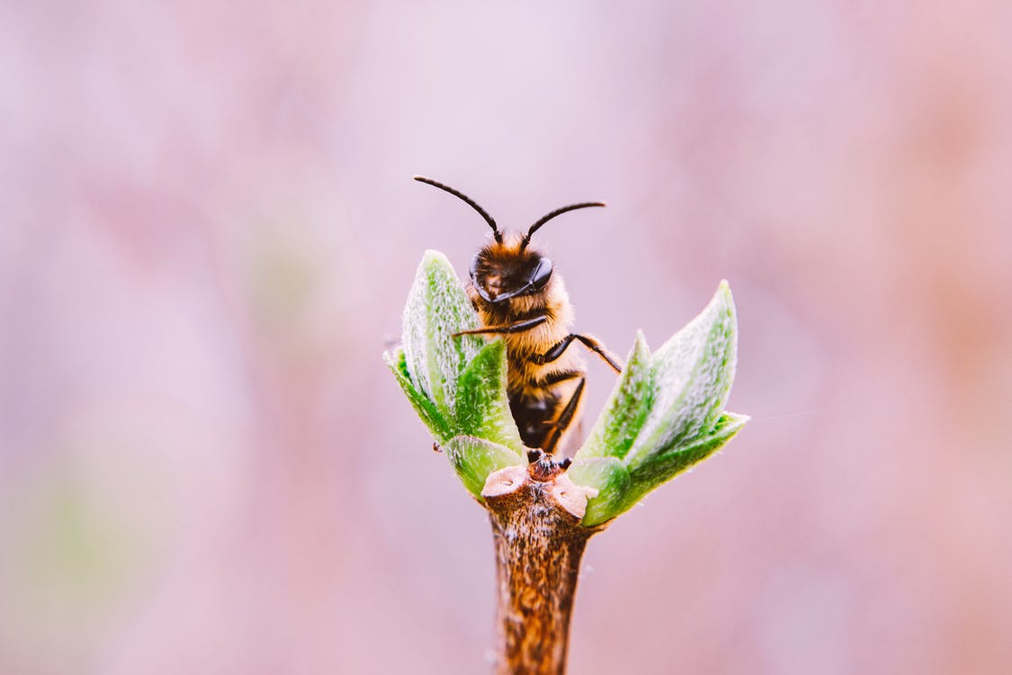 Macro Photo Of Bee