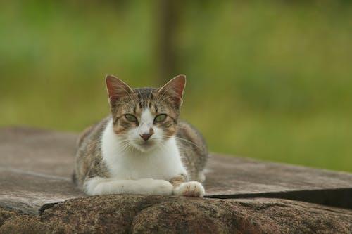 guadeloupe, kedi, kedi surat içeren Ücretsiz stok fotoğraf