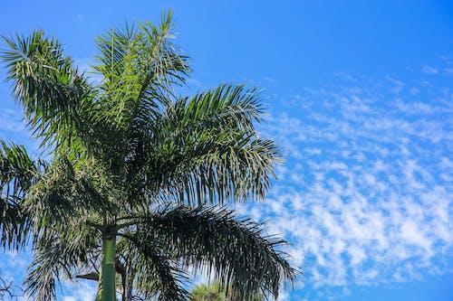 Foto stok gratis berawan, hijau, langit biru, langit mendung