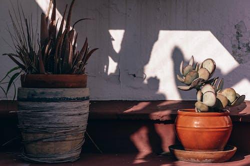 Бесплатное стоковое фото с kodak, Антикварный, архитектура, балеарский