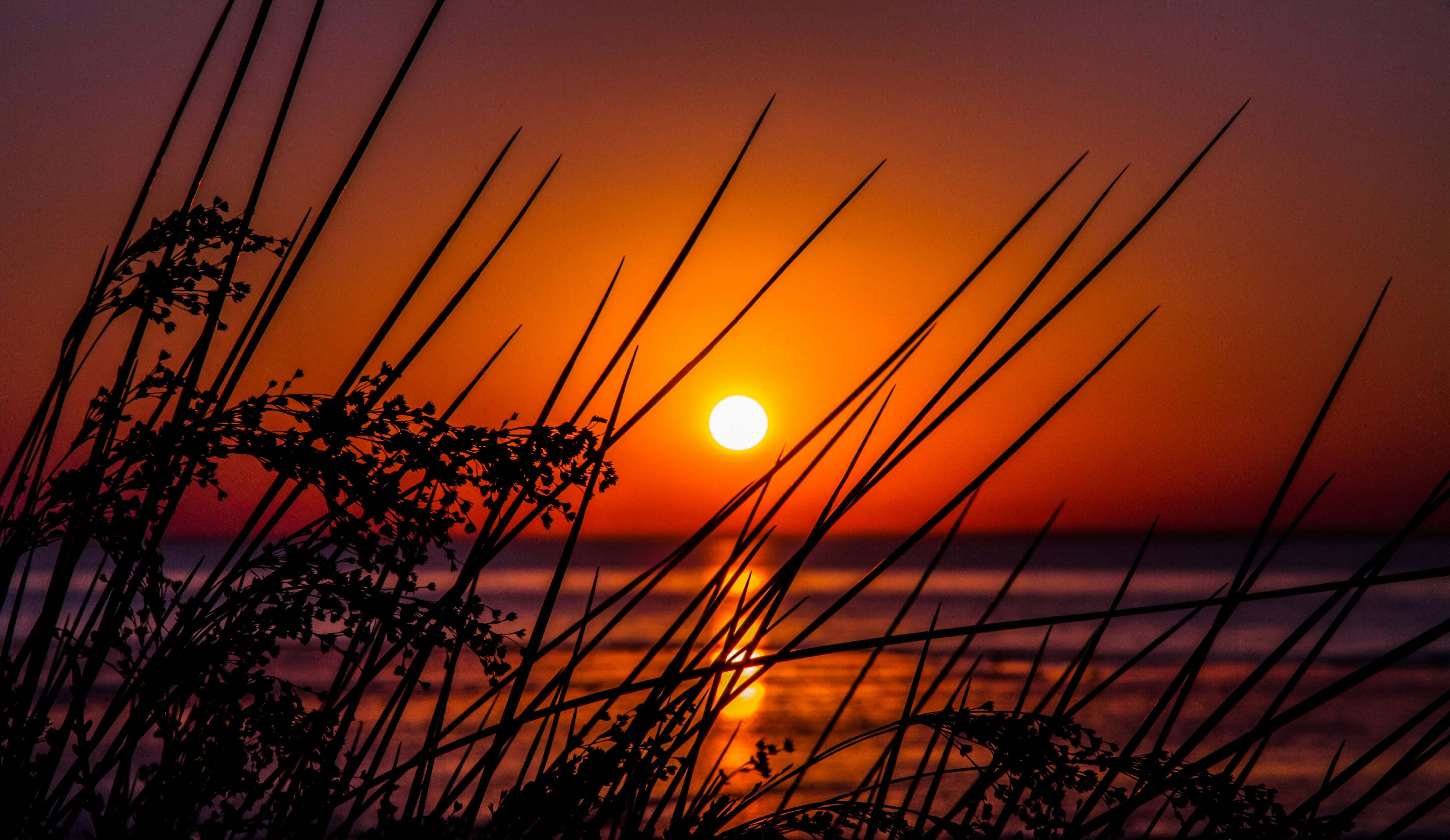 Free stock photo of sunrise, sunset