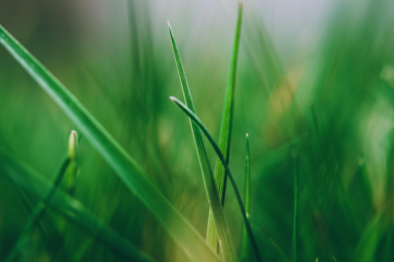 Green Grass Leaf