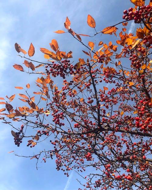 Бесплатное стоковое фото с осенние цвета, чистое небо