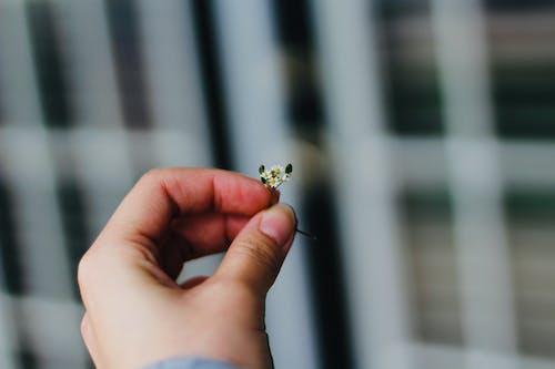 Tiny White Flowers Held by Fingertips