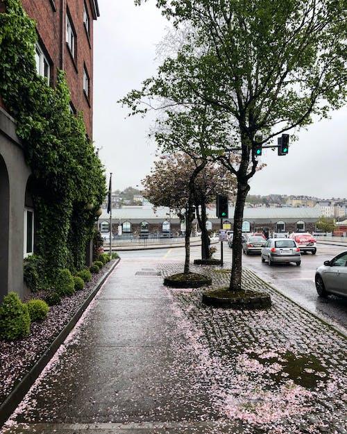 Бесплатное стоковое фото с ирландия, улица