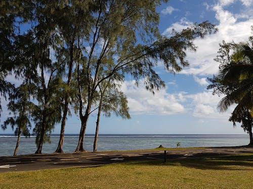 在海邊, 樹, 海濱, 海灘 的 免費圖庫相片