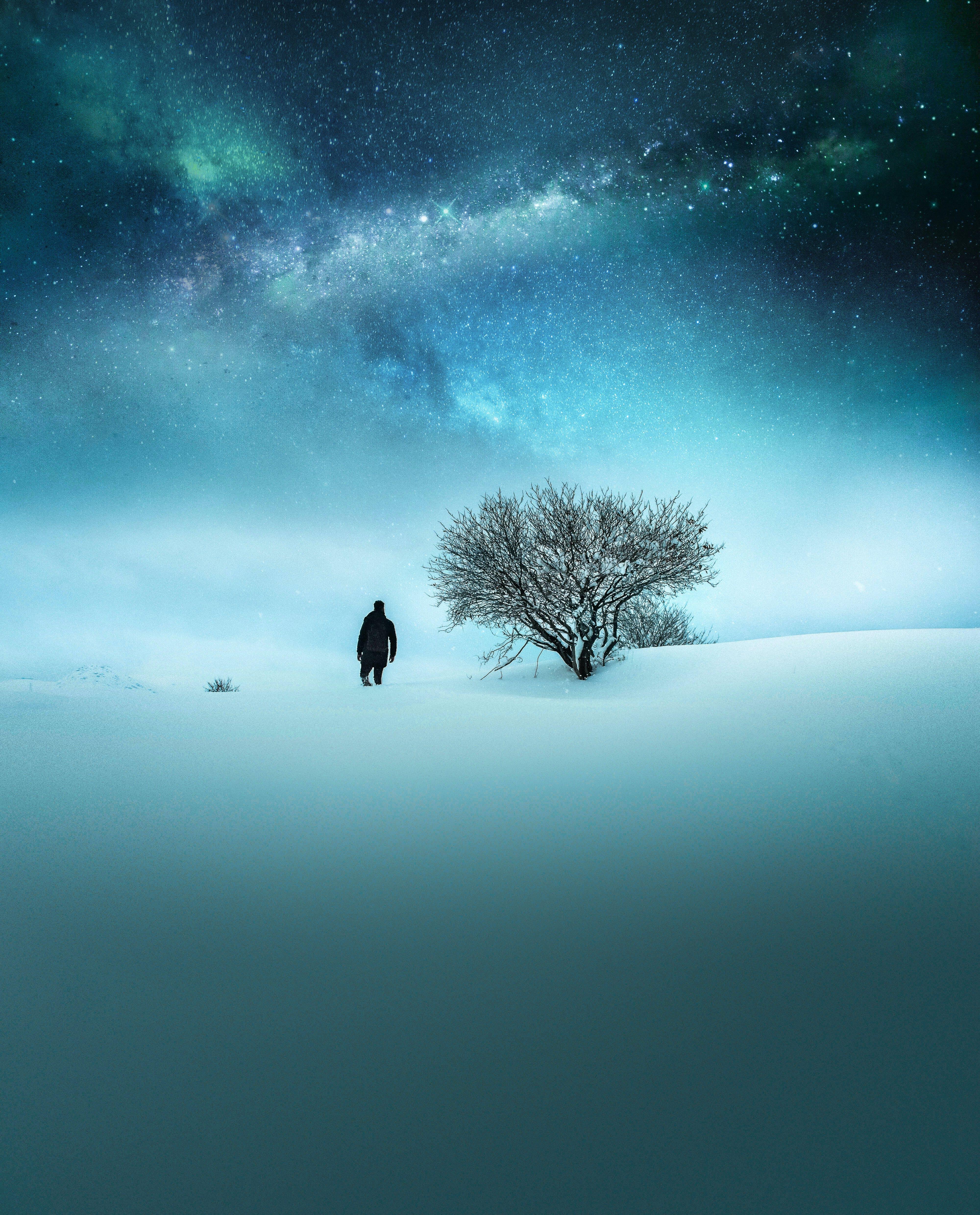 Ingyenes stockfotó csillagos égbolt, csupasz fa, ég, este témában