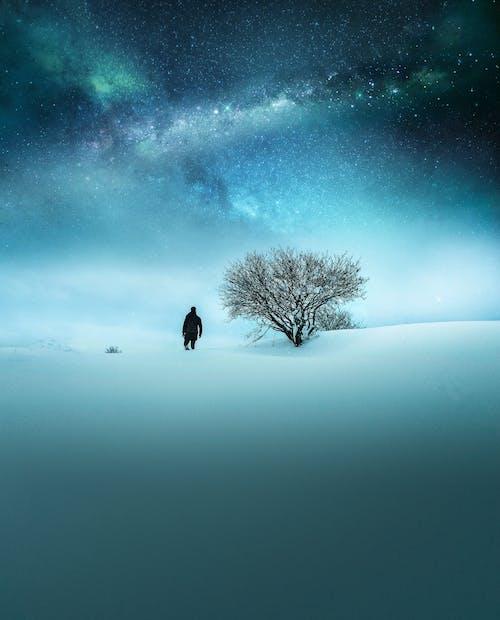 Бесплатное стоковое фото с вечер, голое дерево, закат, звездное небо