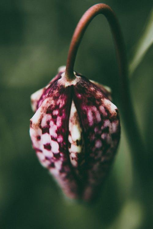 Безкоштовне стокове фото на тему «великий план, зростання, квітка, квітучий»