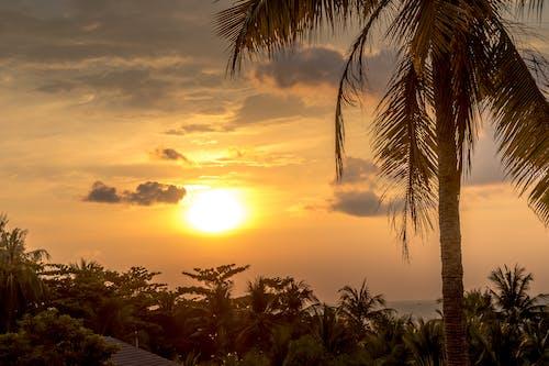 Základová fotografie zdarma na téma cíl cesty, exotický, mraky, palma