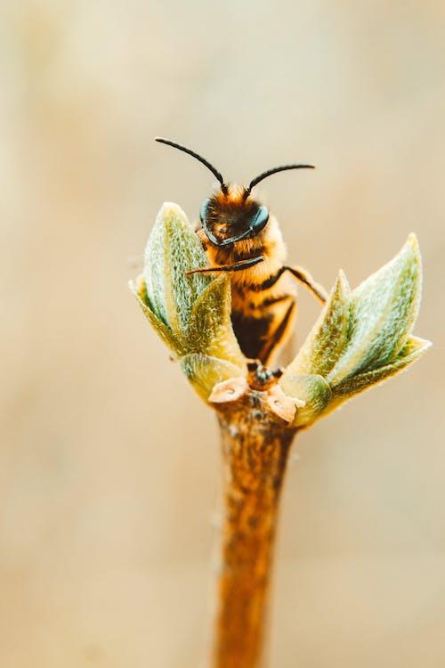 Foto profissional grátis de abelha, animais selvagens, animal, ao ar livre