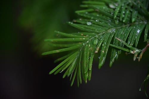 배경 이미지, 빗방울의 무료 스톡 사진