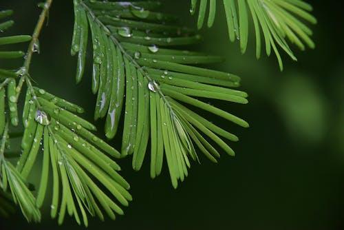배경 이미지, 표면에 물방울의 무료 스톡 사진