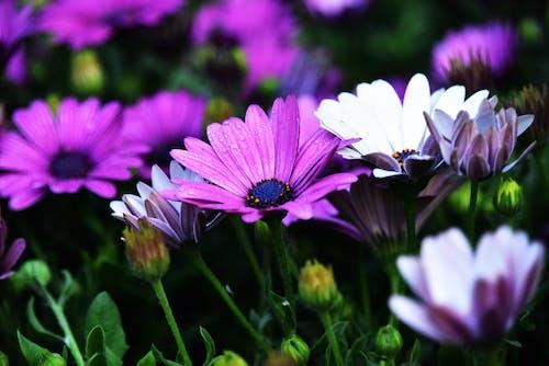 아름다운 꽃의 무료 스톡 사진