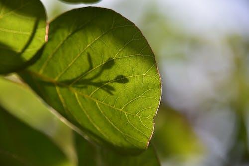 초록색 잎의 무료 스톡 사진