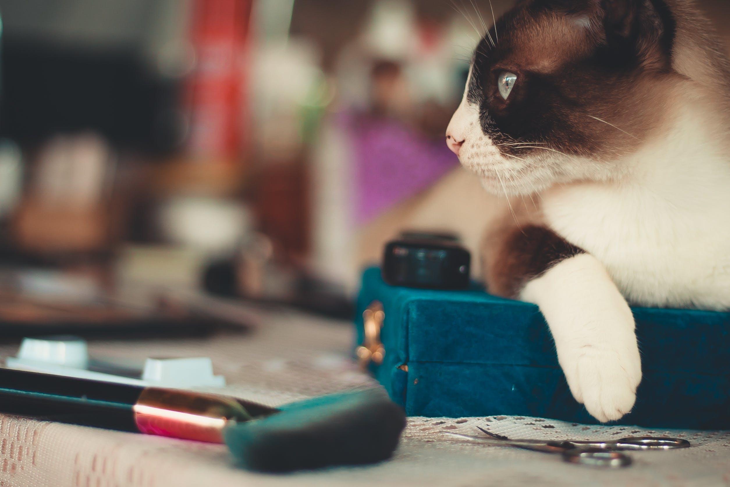 Selective Focus Photo of Cat Near Scissors