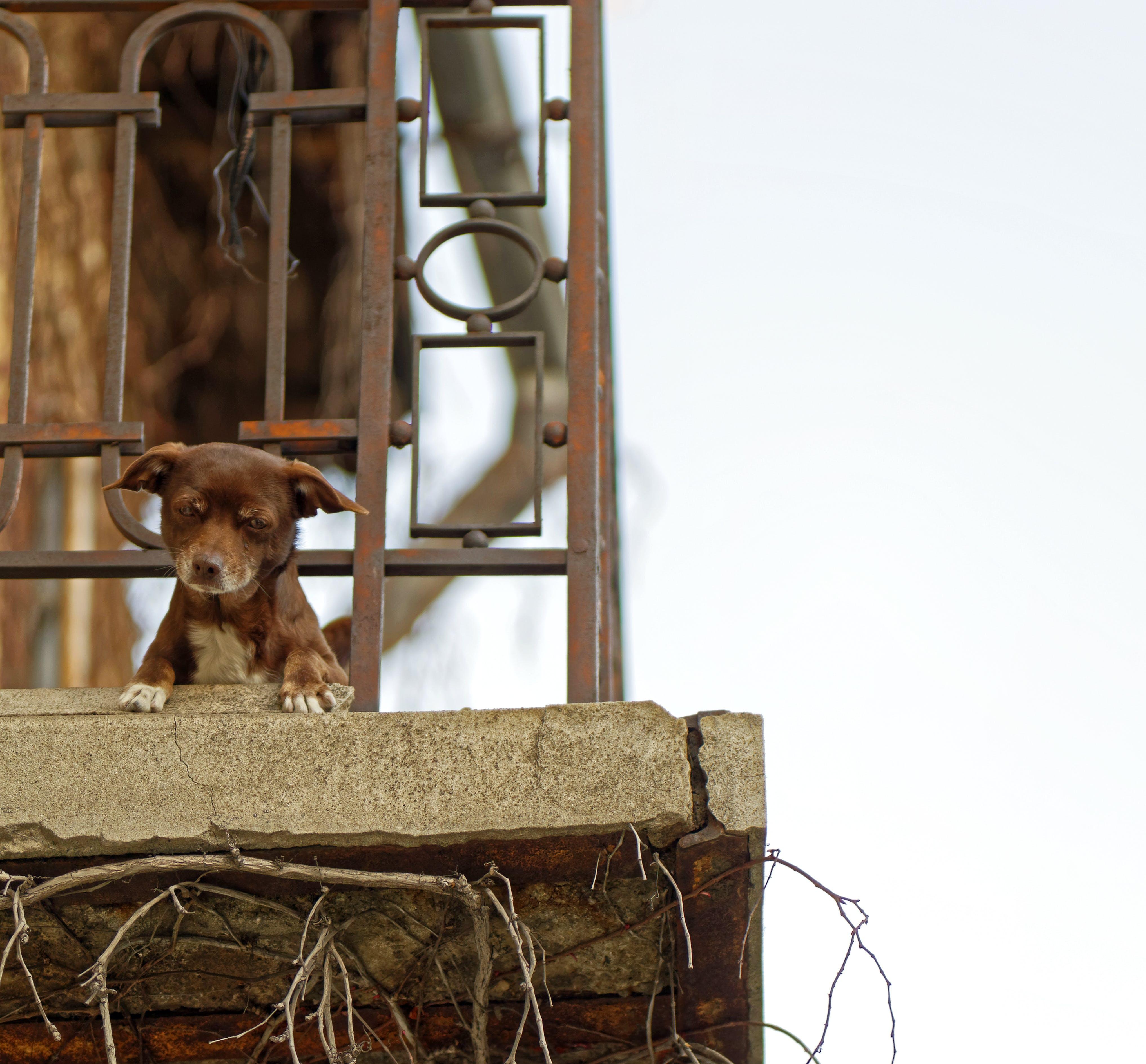 Kostenloses Stock Foto zu balkon, beton, haustier, hund