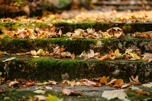 Free stock photo of stairs, steps, moss, blur