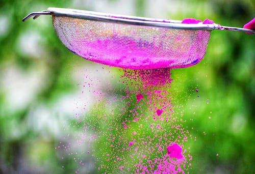 Gratis arkivbilde med farge, festival, friske farger, india-festivalen