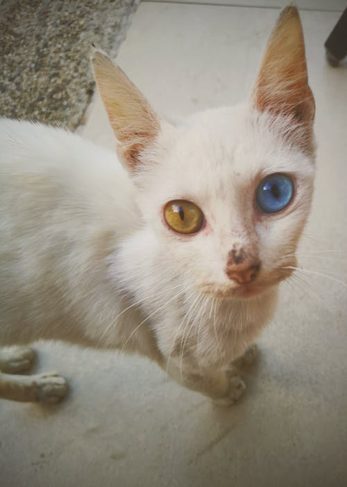 Free stock photo of cat eye, mobilechallenge