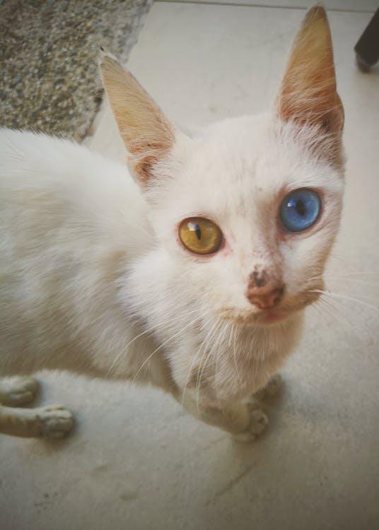 #mobilechallenge, kedi gözü