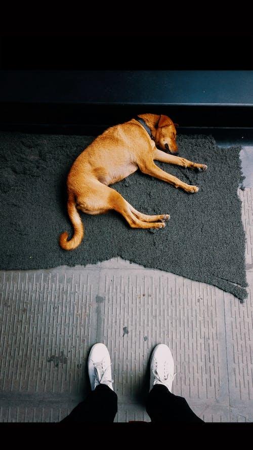 #mobilechallenge, 小狗, 放棄, 火車月台 的 免费素材照片