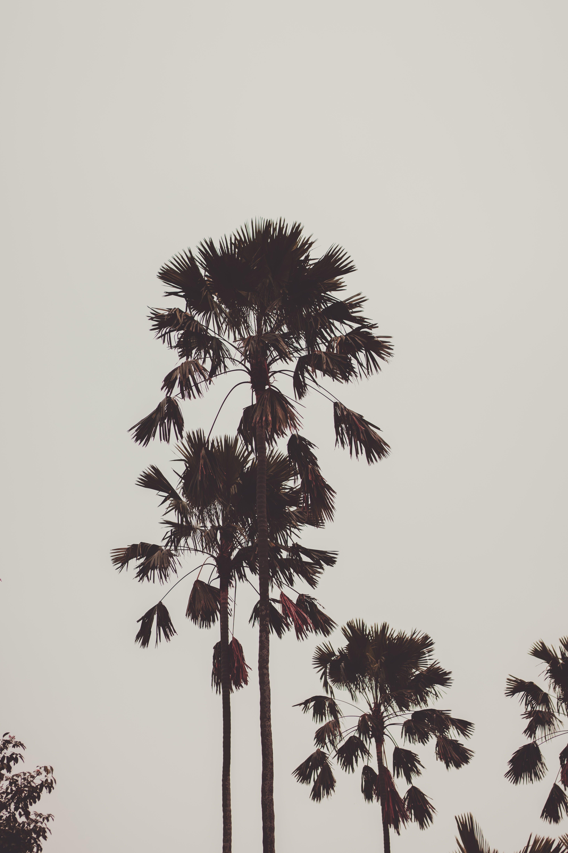 Foto profissional grátis de árvores, céu, coqueiros, folhas de palmeira