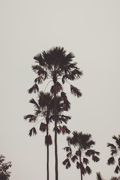 HD-обои, деревья, кокосовые пальмы