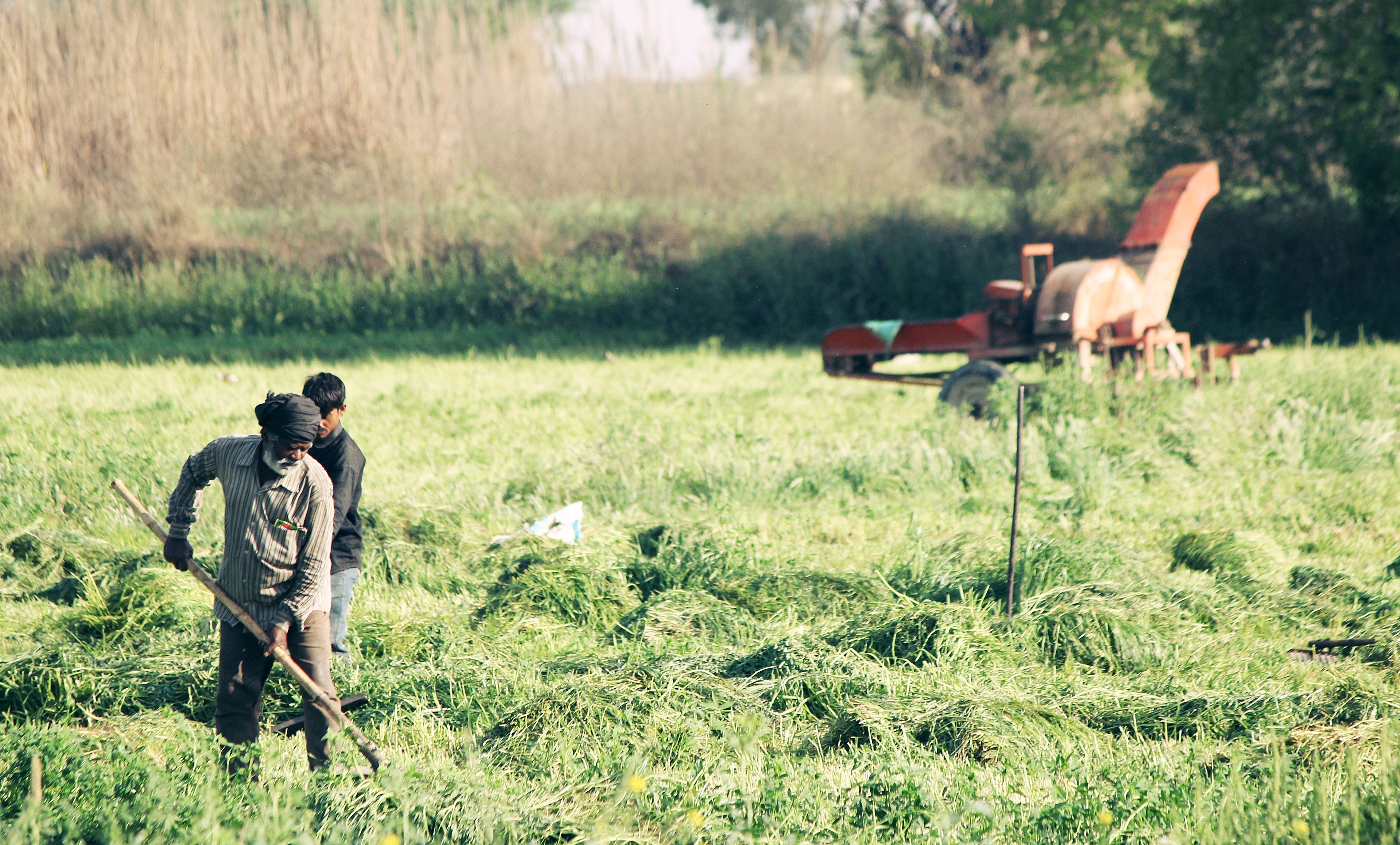 alan, çiftçiler, Çiftlik, çim içeren Ücretsiz stok fotoğraf