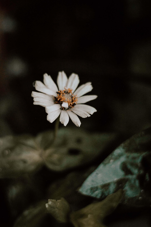 Kostenloses Stock Foto zu blühen, blume, blumen wallpaper, blütenblätter