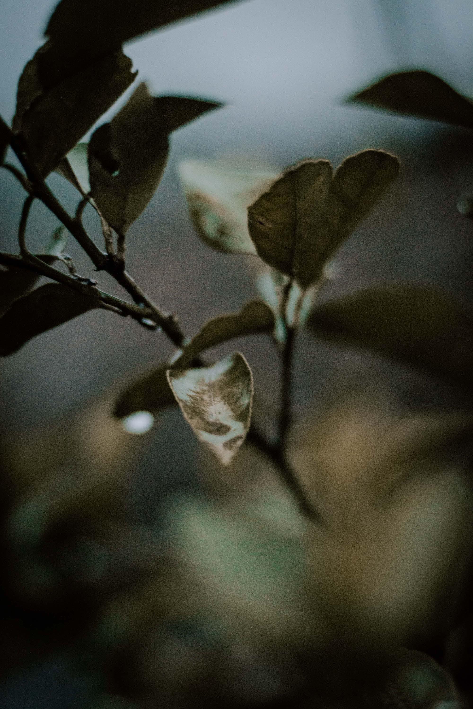 Základová fotografie zdarma na téma barvy, makro fotografie, prostředí, rozmazané pozadí