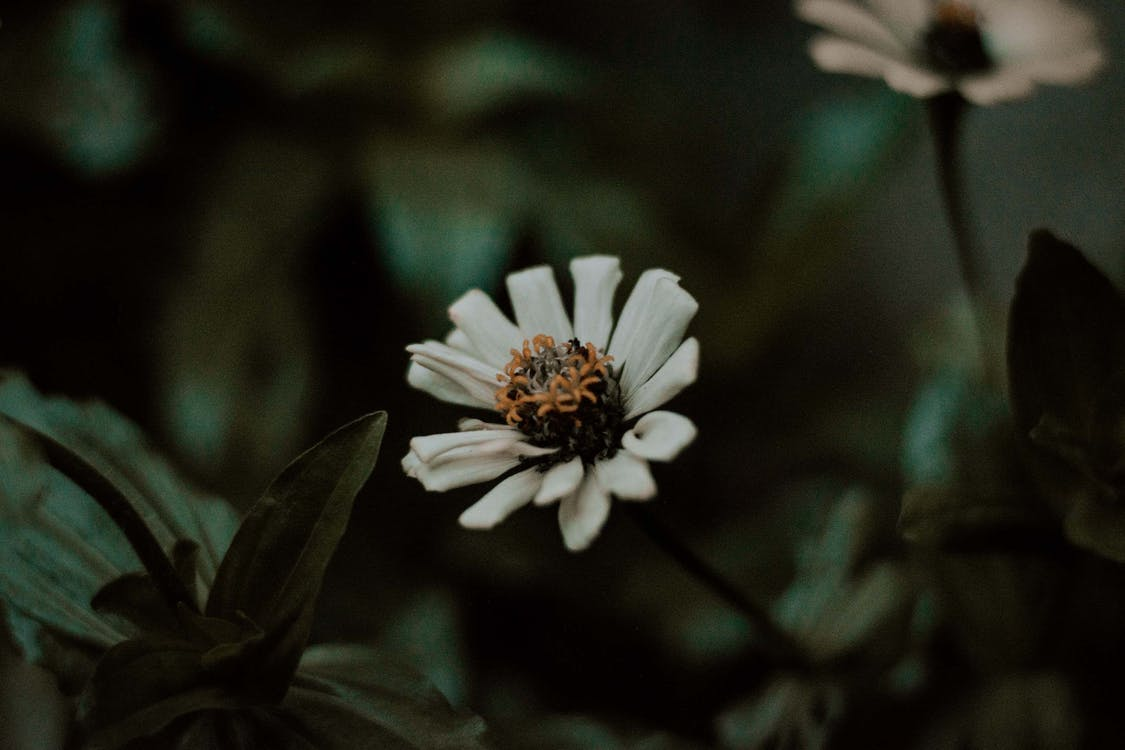 HD-обои, белый цветок, глубина резкости