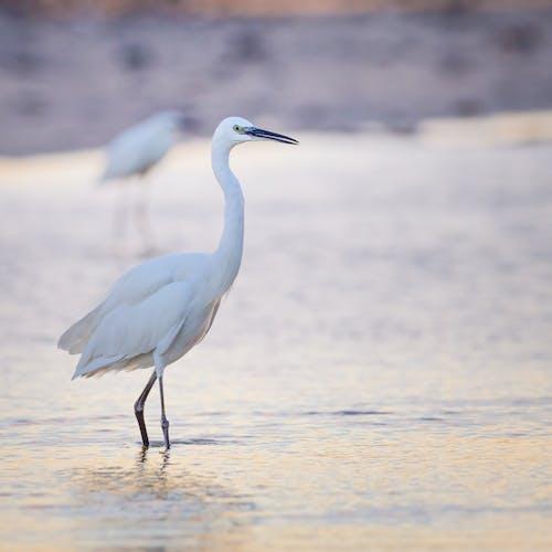 Ingyenes stockfotó állat, fehér, Florida, gém témában