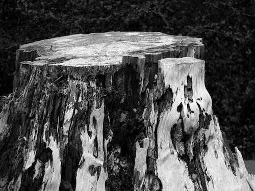 Ingyenes stockfotó barlang, durva, fa, fehér témában