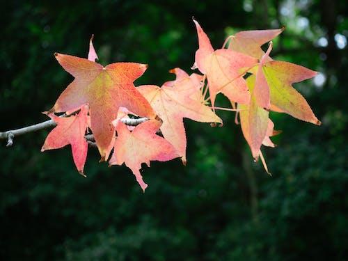 Ingyenes stockfotó aranysárga, barna, botanika, elszigetelt témában