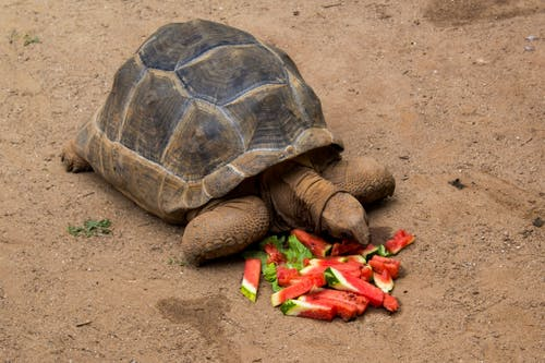 Бесплатное стоковое фото с животные, черепаха