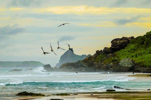 Δωρεάν στοκ φωτογραφιών με ασφάλεια στην παραλία, καλύβα παραλίας, καλύβες παραλίας, καπέλο παραλίας