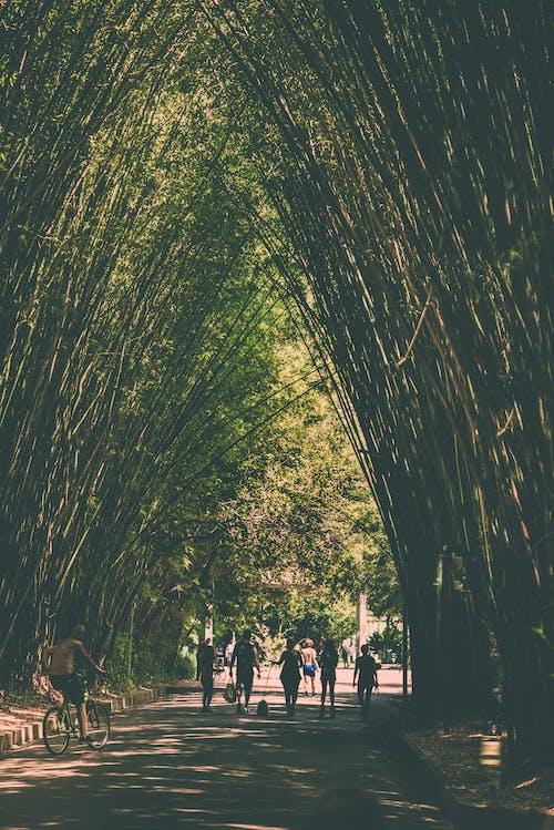 Безкоштовне стокове фото на тему «парк, прохід»