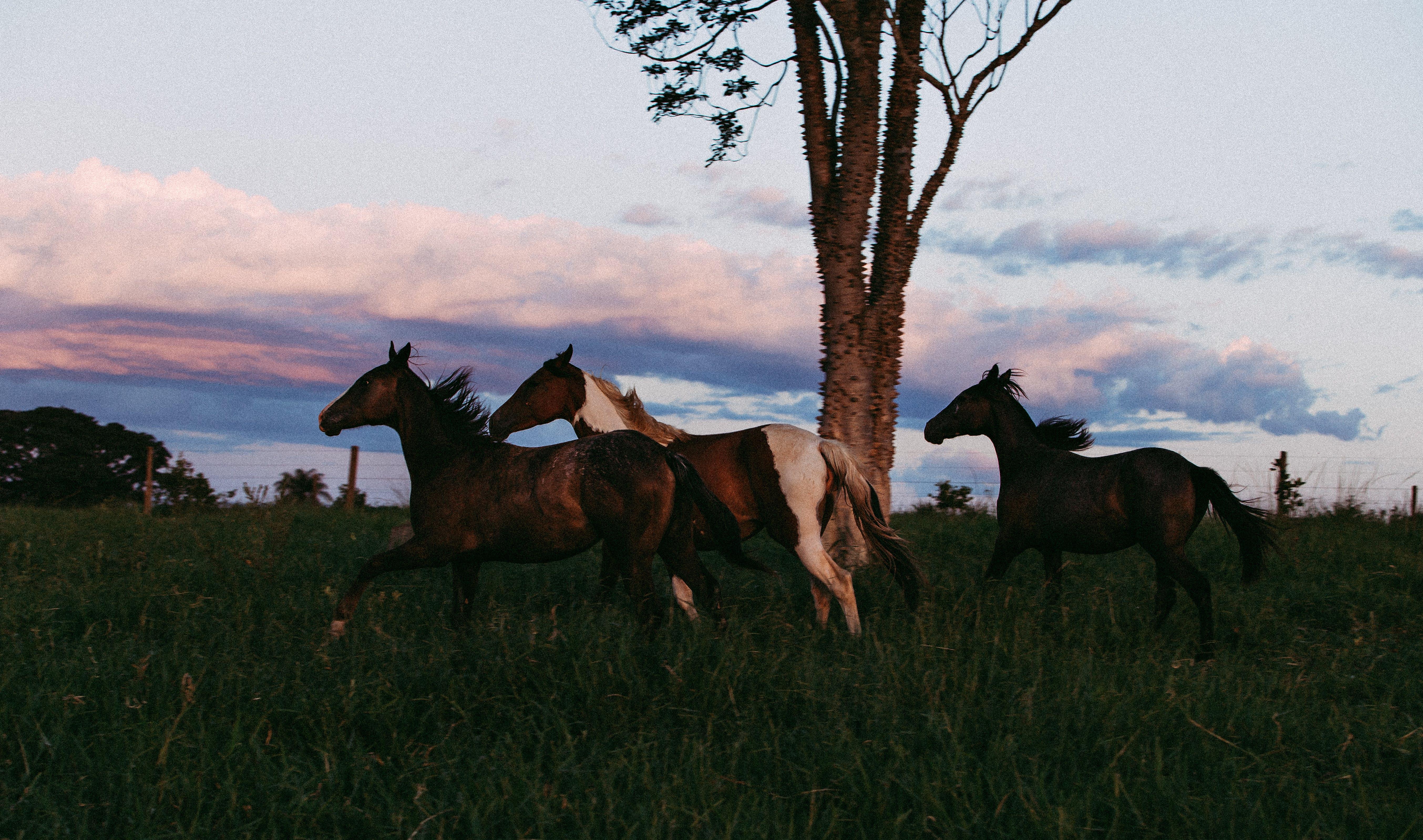Photo of Three Horses Running on Grass Field