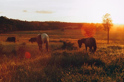 Photo of Horses Grazing in Grass Field