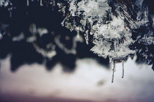 Darmowe zdjęcie z galerii z czarno-biały, lód, lodowaty, malowniczy