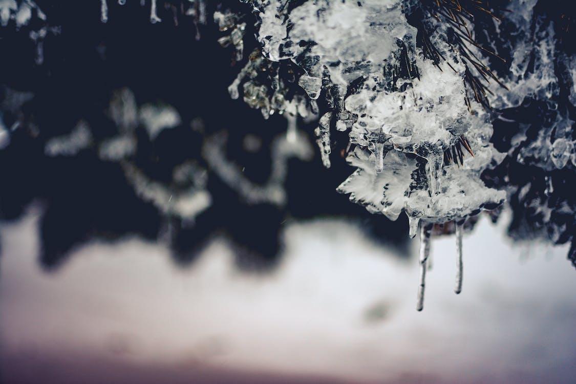 dagsljus, fokus, frost