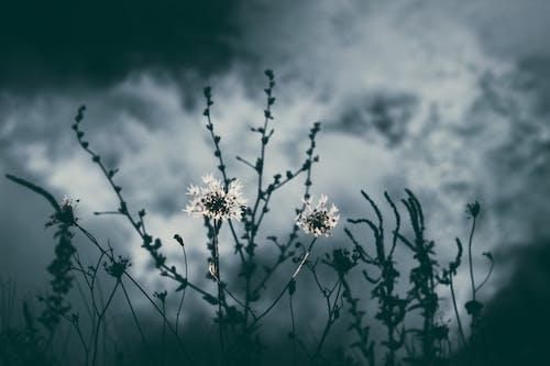 ダーク, フラワーズ, 咲く, 曇りの無料の写真素材